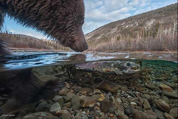 لقطات الحياة البرية 2