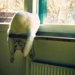 ليونة القطط  12