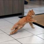 ليونة القطط  5