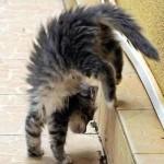 ليونة القطط 6