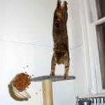 ليونة القطط  7