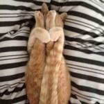 ليونة القطط  8