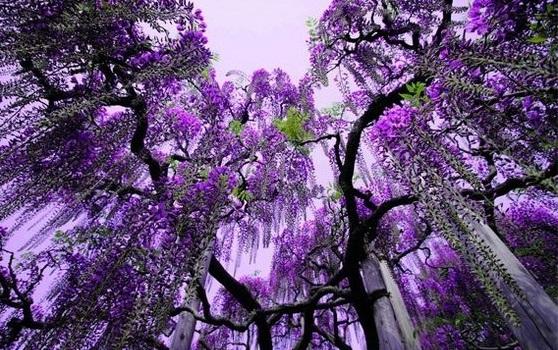 نفق الورود في اليابان  14