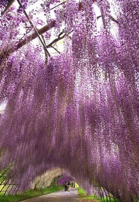 نفق الورود في اليابان  22