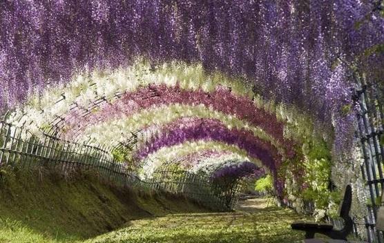 نفق الورود في اليابان  3
