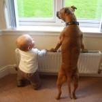 أطفال و كلاب