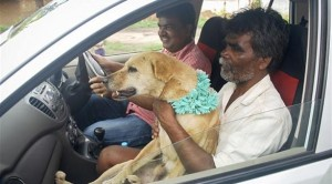 اسرة هندية تزوج ابنتها لكلب ضال 2