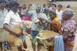 اسرة هندية تزوج ابنتها لكلب ضال 3