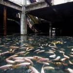 الأسماك تحتل سوقًا للتسوق في بانكوك