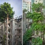 الأشجار تتغلب على المباني في هونج كونج
