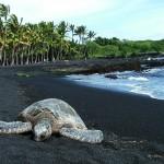 شاطيء الرمال السوداء - هاواي