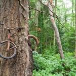 شجرة تبتلع دراجة بجزيرة فاشن- واشنطن