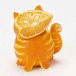 قطة البرتقال
