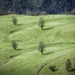 قطعان الخراف