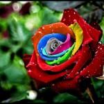 ألوان قوس المطر