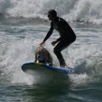مسابقة ركوب الامواج للكلاب