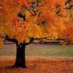الخريف الأوروبي