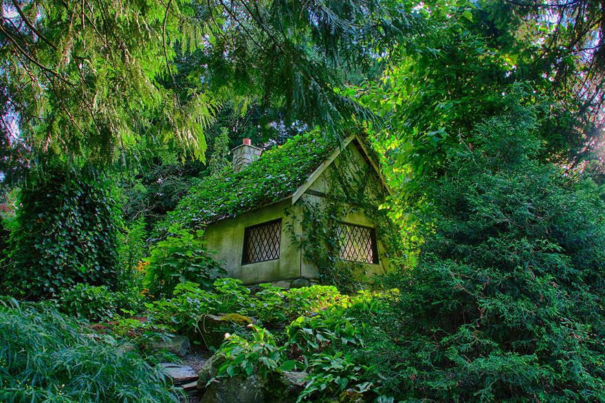البيت الخفى فى الغابة