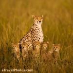 صور عائلية للحيوانات