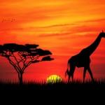 غروب الشمس في إفريقيا