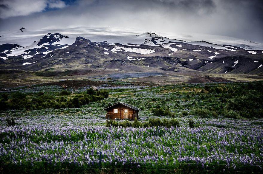 منزل فى وسط المروج الايسلندية