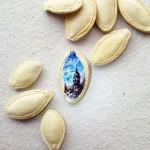 حبات الكاجو