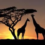 Sun-trees-animals-wildlife-silhouettes-1574021-480x320