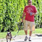 أدم ساندلر ونزهة في شمس رائعة مع كلبه