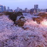 اشجار اليابان