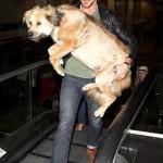 ريان جوسلينج يحمل كلبه بسبب السلم