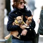 ساندرا بولوك مع كلبيها الصغيرين وتحملهما بكل رقة