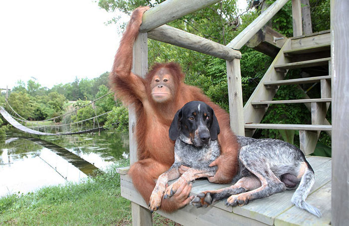 صداقات الحيوانات