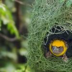 منازل الطيور والحيوانات  17