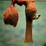 عشش الطيور والحشرات