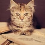بالصور .. أنت لن تزيد الكتاب جمالًا .. ولكن ربما القطط تفعل !!