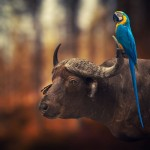 عالم الصور السحرية