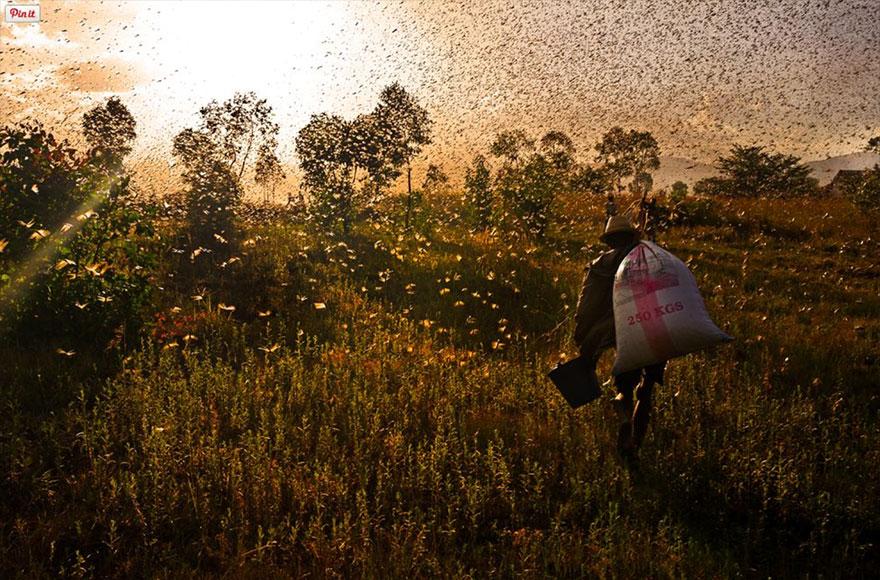 هجرة الطيور و الحيوانات