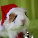 حيوانات تحتفل برأس السنة