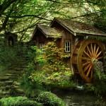 منازل فى الغابات