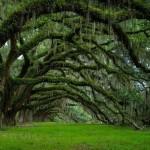Avenue_Of_Oaks_At_Dixie_Plantation_In_South_Carolina