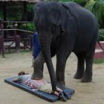 مساج الأفيال