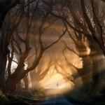 The_Dark_Hedges_In_Northern_Ireland