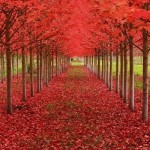 Tree_Tunnel_in_Oregon