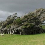 Trees_In_New_Zealand