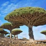 Trees,_Yemen