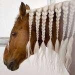 حصان بضفائر بيضاء