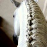 حصان بضفيرة بيضاء