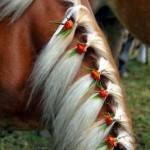 حصان بضفيرة بيضاء مزينة بالورد الأحمر