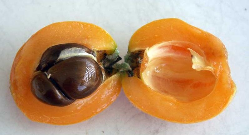 فاكهة الأكى