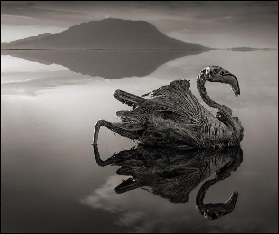 البحيرة الغامضة